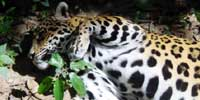 slideshow image 3